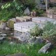 鎌倉を知る ーー 柳原神池のカワセミ ーー