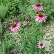 6月の「こもれびの庭」