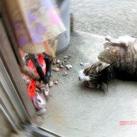 猫小屋のタロちゃんと、本宅のフウちゃんは、似たもの同士かにゃ~♪