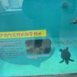 亀の繁殖施設