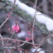 Snowy Landscape of Ishiyamadera  on Jan. 15    1月15日、石山寺の雪景色