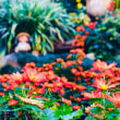バッタとタヌキと菊