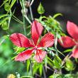 花彩々   猛夏日