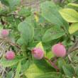 色々な果実