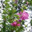 花菜ガーデンを散策