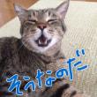 猫はオッサン臭ナシ、なのだ
