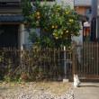 柿の木の家