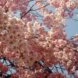2018年 春 一時帰国 桜編