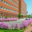 旭川市はツツジの季節を迎えました。