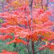 11月8日  鮫川村は紅葉真盛り
