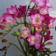 庭に咲く小さな花3月15日