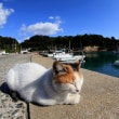 九州B島の猫たち 2017年11月 その8