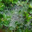 雨の水結晶