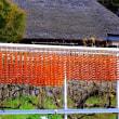 最盛期の串柿作り-和歌山県かつらぎ町:四郷