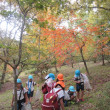 秋をいっぱい見つけたよ(*^-^*)