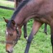 [木村秀則牧場見学報告]期待の1歳牝馬3頭は一気に!