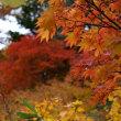 八幡平 大沼の紅葉