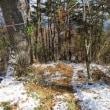 すそ野まで雪 空燃えて いつもの里山へ