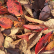 秋でんねん