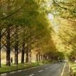 黄葉のメタセコイア並木