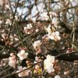春の足音(⌒‐⌒)