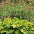 Garden & Garden