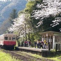 ◆小湊鐵道。来年は行けますように... - 2006/4/22