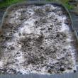 レタス栽培、冬取り玉レタス畝作りと植付