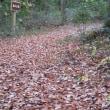 カスミサンショウウオ産卵池の整備。ほだ木準備。屋外飼育のヘイケボタル幼虫。