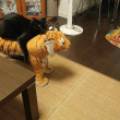 7月の我が家の猫たち