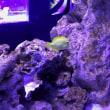 鯉も泳ぐソラマチ