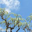 「相模原麻溝公園」の「藤の花」がたおやかに咲きだした!!