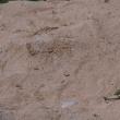 波照間ブルーが輝く『ニシ浜ビーチ』@波照間島