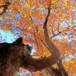 奥胎内の秋