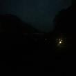 にぎやかな夜です♪