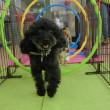 幼稚園体験にきてくれた【ウニくん】(*^-^*)  犬のしつけ教室@アロハドギー