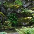 貞観園 回遊式庭園の細部  柏崎市