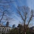 よく晴れた寒い休日