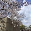 大阪城の桜🌸