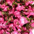 八重桜の塩漬け