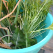 春に備えるベランダ野菜