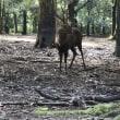 鹿さん   二