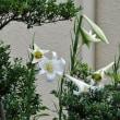 この時季、ふと目に留まってこころ惹かれた花