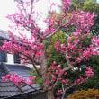 春ですね~(^0^)