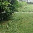 暑い中草刈