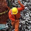 今年の漁獲量は370万トンに到達   ロシア