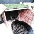 コラム225   猫はハウスで丸くなる