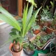 植物の寒さ対策