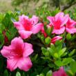 たくましい繁殖力、この外来種、他の植物を駆逐してしまう…