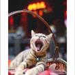 猫の楽園 -台湾- 2013.7.17~7.29